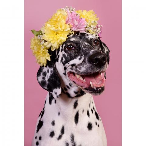 London's pop-up dog photography service